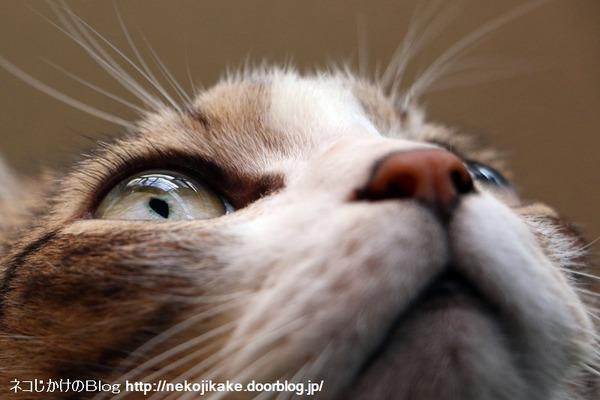 2016092303猫の顔。3