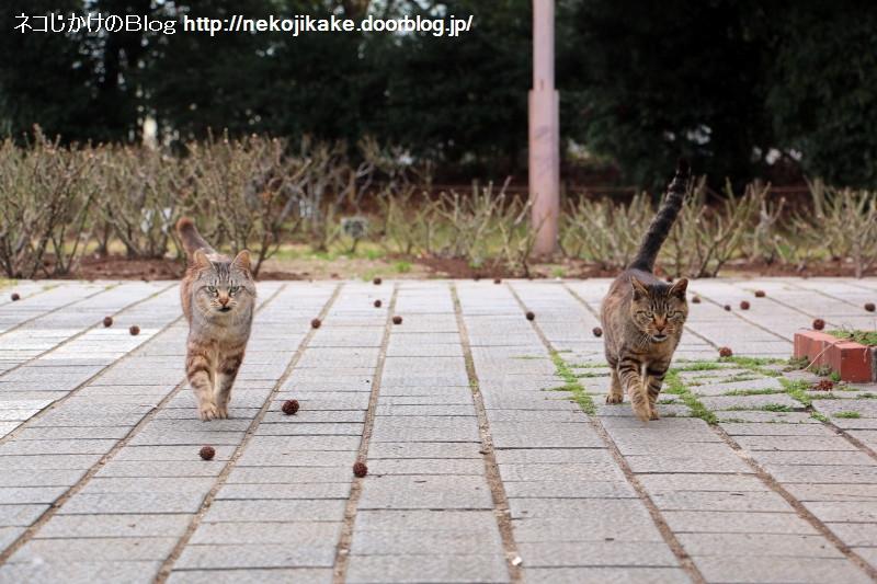 2016022302迫るネコ二匹。