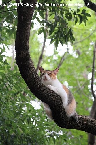 ネコも暑けりゃ木に登る。