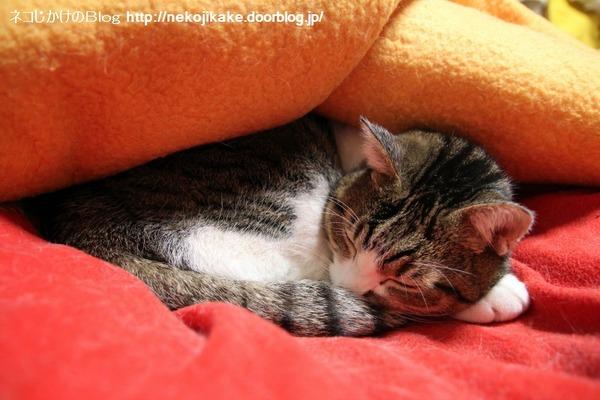 2014022201猫の日。