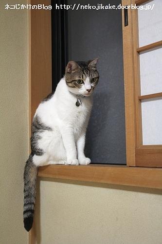 ネコたるもの、上を目指さねば・・・。