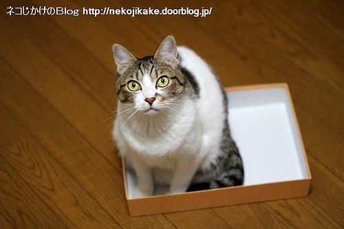 ネコは箱が好き。
