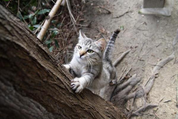 にゃんにゃんにゃん、でネコの日。その2 みこ1