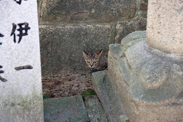 がんばれ!その6 キジトラ子ネコ