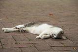 ネコが寝る。その2