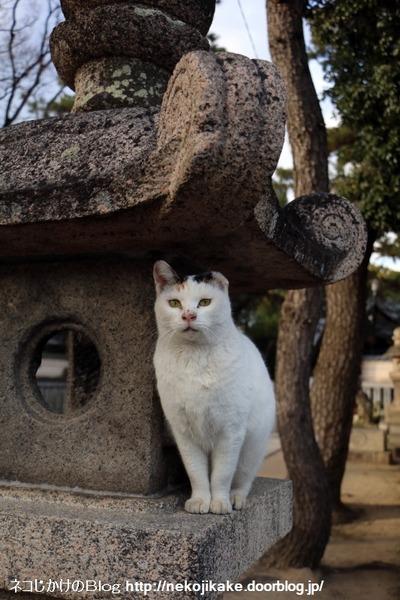 2016011605神社の猫たち。1