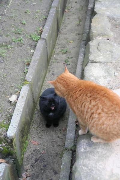 フレンドリー。その2 ちび、黒ネコ