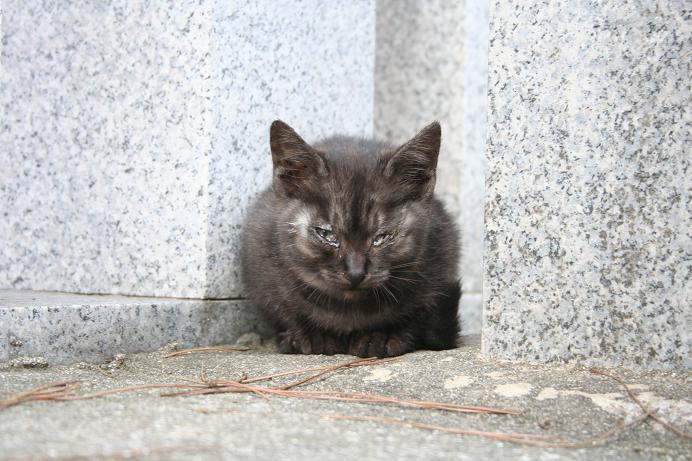 子ネコ単独撮影に成功。