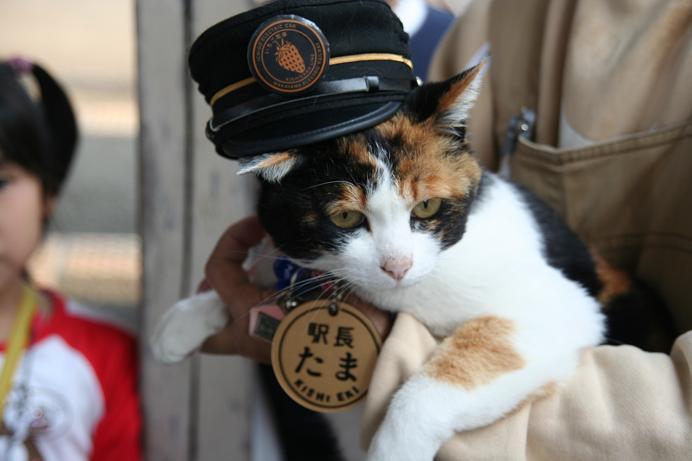 和歌山電鐵 たま駅長に会ってきた。その3
