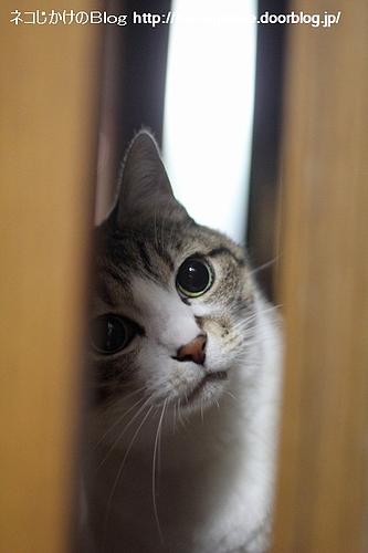 目ん玉見開いてよく見よう。