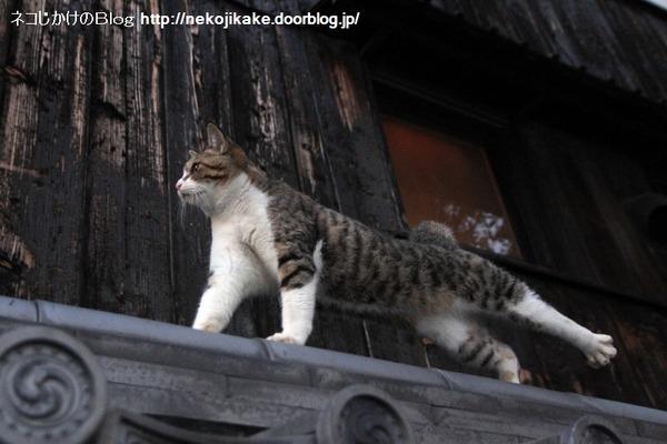 2013112402猫背が猫背じゃなくなる時。