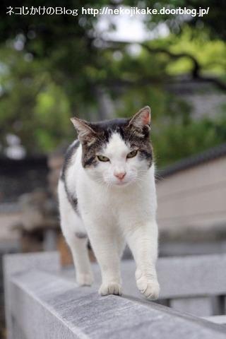 2013051602猫らしい。