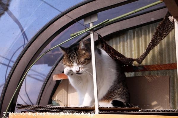 2017010603猫は外を目指す。3