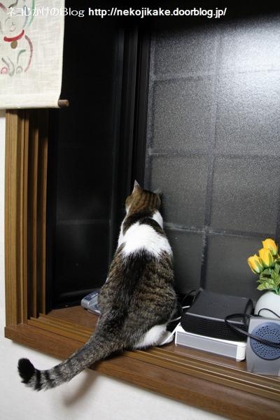 2014062201猫の鳴き声が聞こえる。