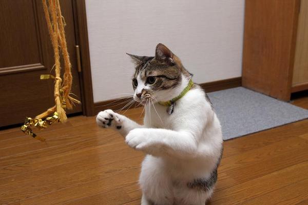 猫パンチ。シマ1