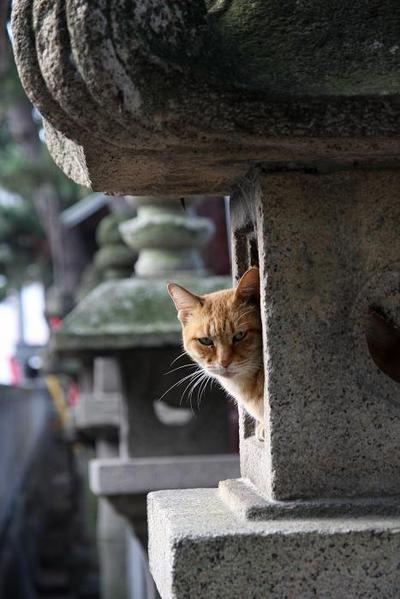 愛情。その3 キジトラ子ネコのお母さん