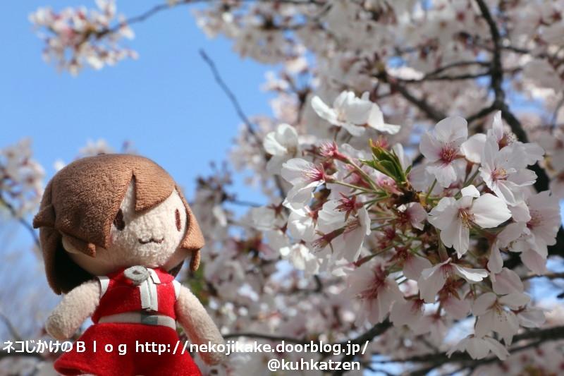 2020041003桜は何にも知らないけれど。1