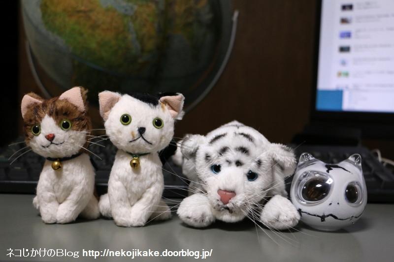 2017080802世界猫の日だからね。1