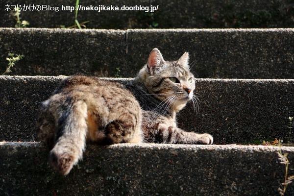 2016050503階段猫。1