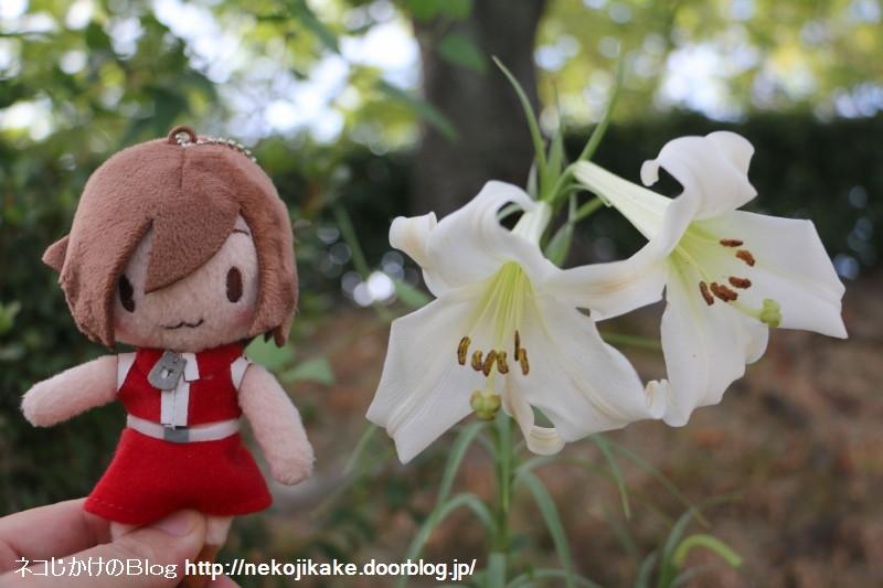 2018081402歩く姿は百合の花。