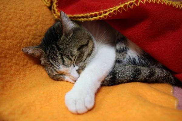 おやすみなさい。シマ1