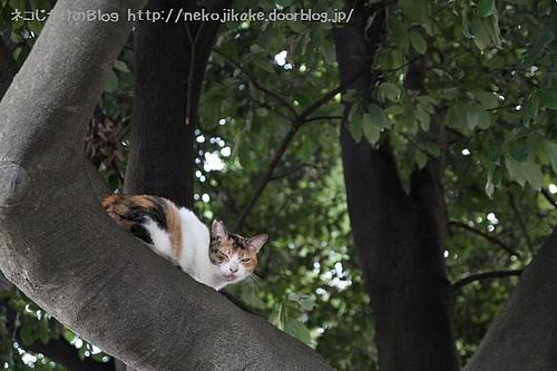 猫は高いところに登る。