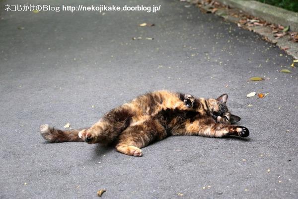 2016060912寝転んでナンボの猫の世界。4