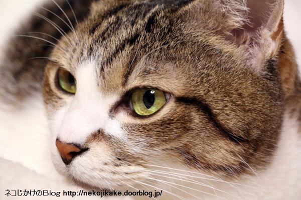 2016120105猫の顔を撮る。1