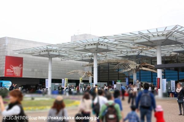 2016112014大阪自然史フェスティバル2016に行ってきました。2