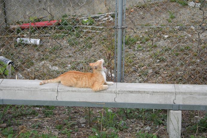 定点観察地のネコ。