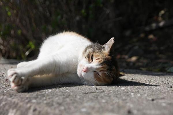 ネコさんが転んだ。その2 みーこちゃん
