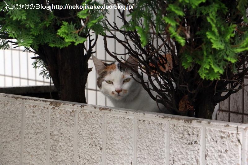 2016071512あなたは猫に見守られています。