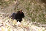 黒ネコは。