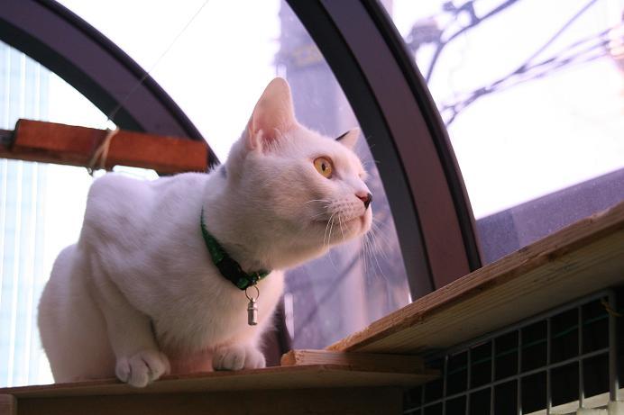 少しでも空に近づきたくて。うちのネコの場合。クロ