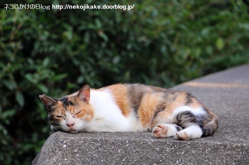 2015082406この世の中に猫の居場所がないわけがない。2