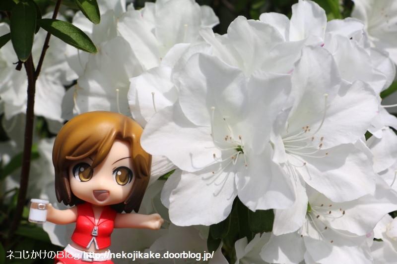 2018042205白いツツジが咲いてました。