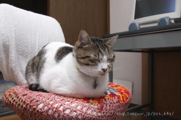 動かざること猫の如し。シマ1