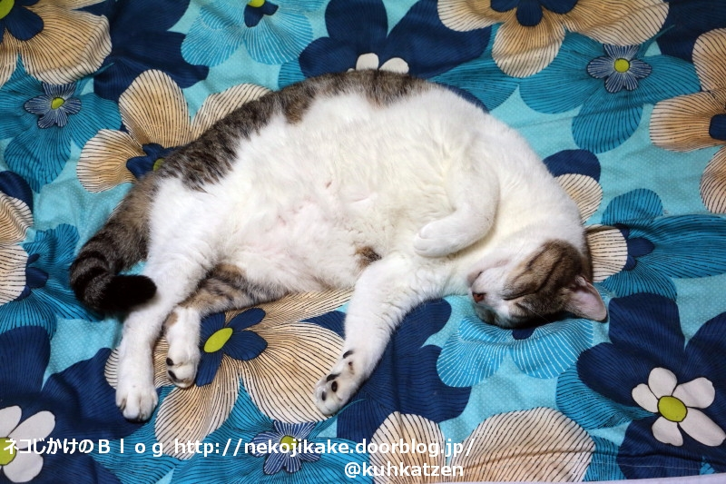 2020072903よく寝る猫は育つ。1
