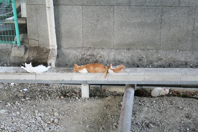 あの母ネコだった。