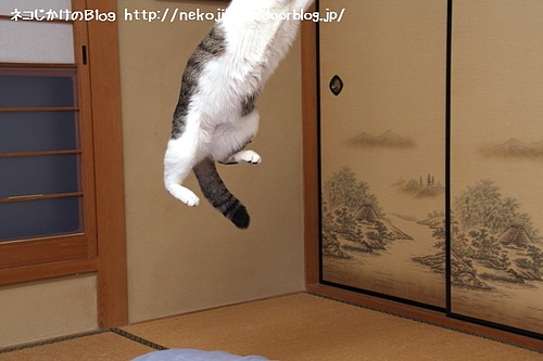 こんなにジャンプするとは・・・。