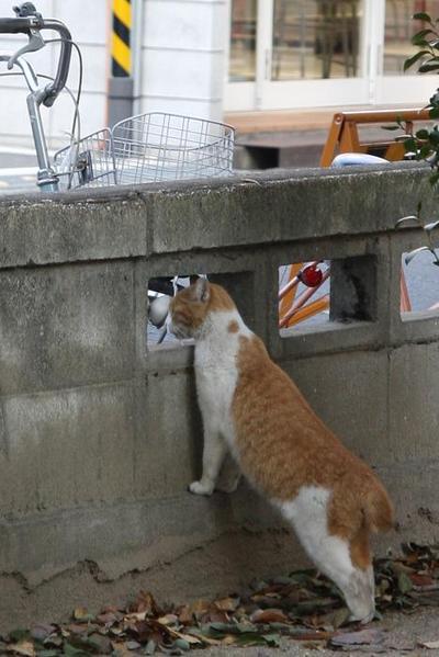 日曜日のネコたちへ。その3 茶白