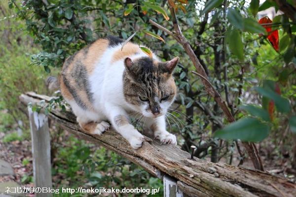 2015022703ネコってやつは2。