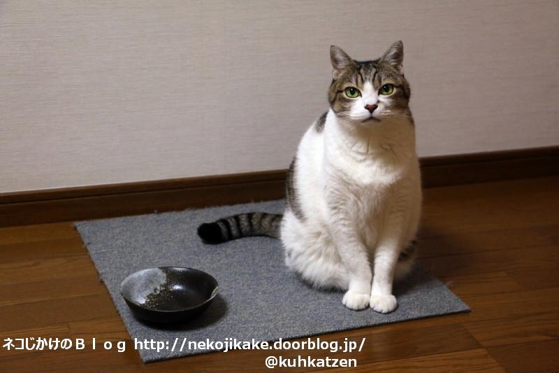 2020041501皿と猫。