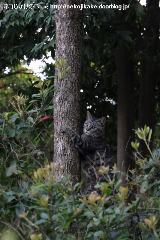 2015042307猫を見て思うこと。4