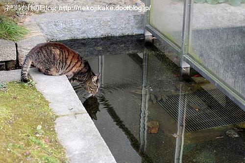 よく考えよう、お水は大事だよ。