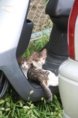 ネコとバイク。その2