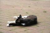 ネコが寝る。その1