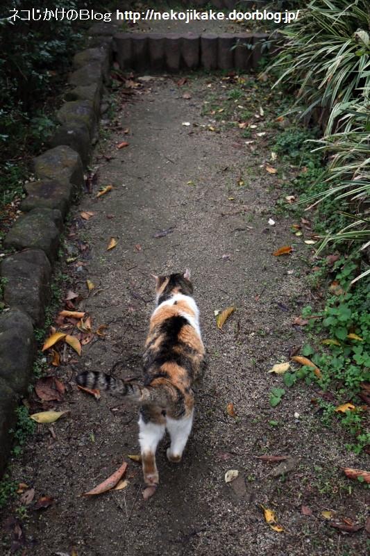 2015111906猫に引かれて。1