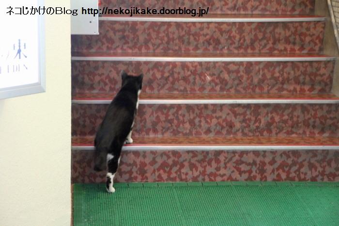 を 上る 階段