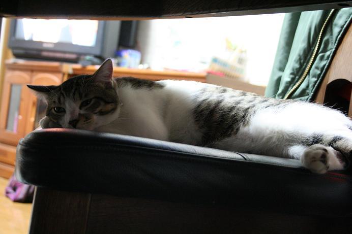 やっぱりネコはいるところはいいところ。シマ